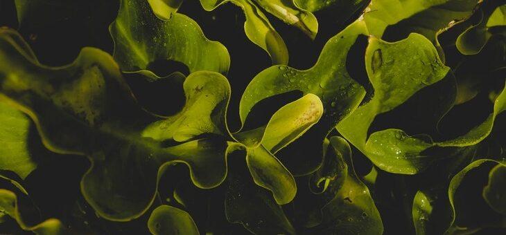 На 8,7% ежегодно будет расти спрос на микроводоросли за счет увеличения использования биоудобрений